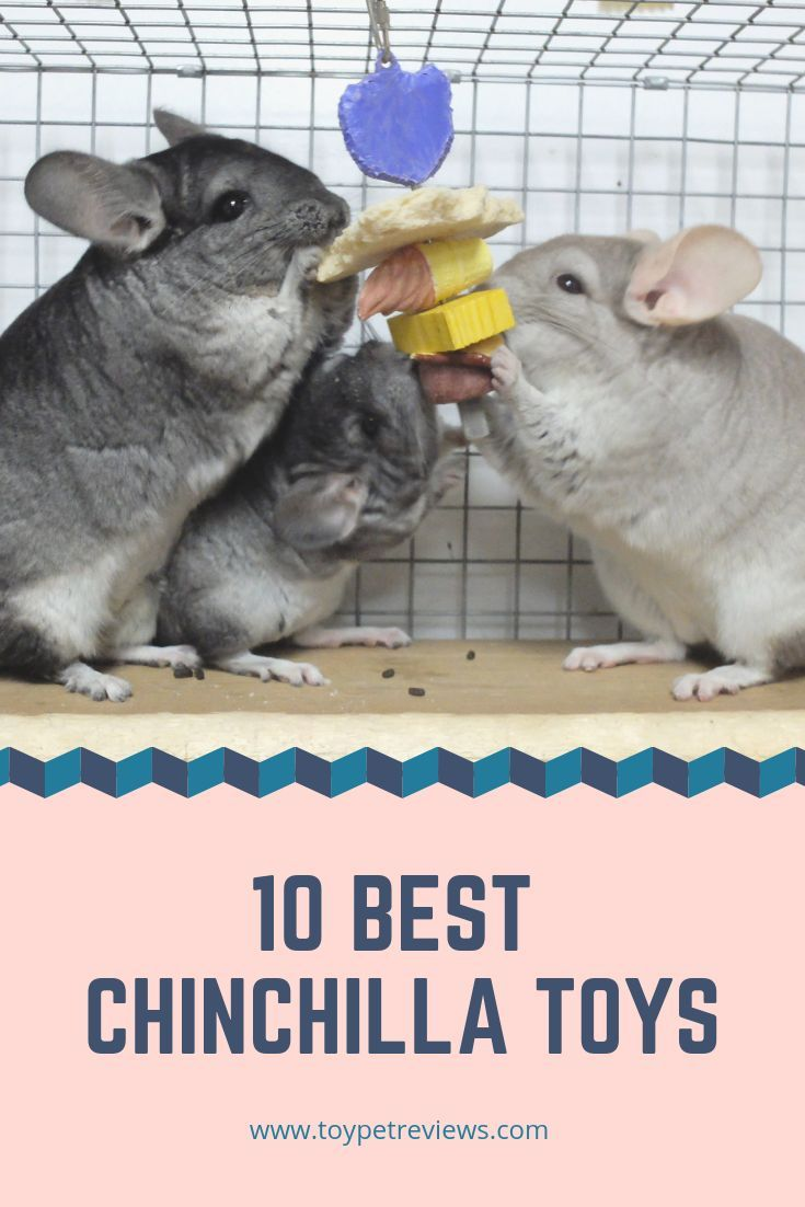 10 Best Chinchilla Toys To Keep Your Friend Stimulated