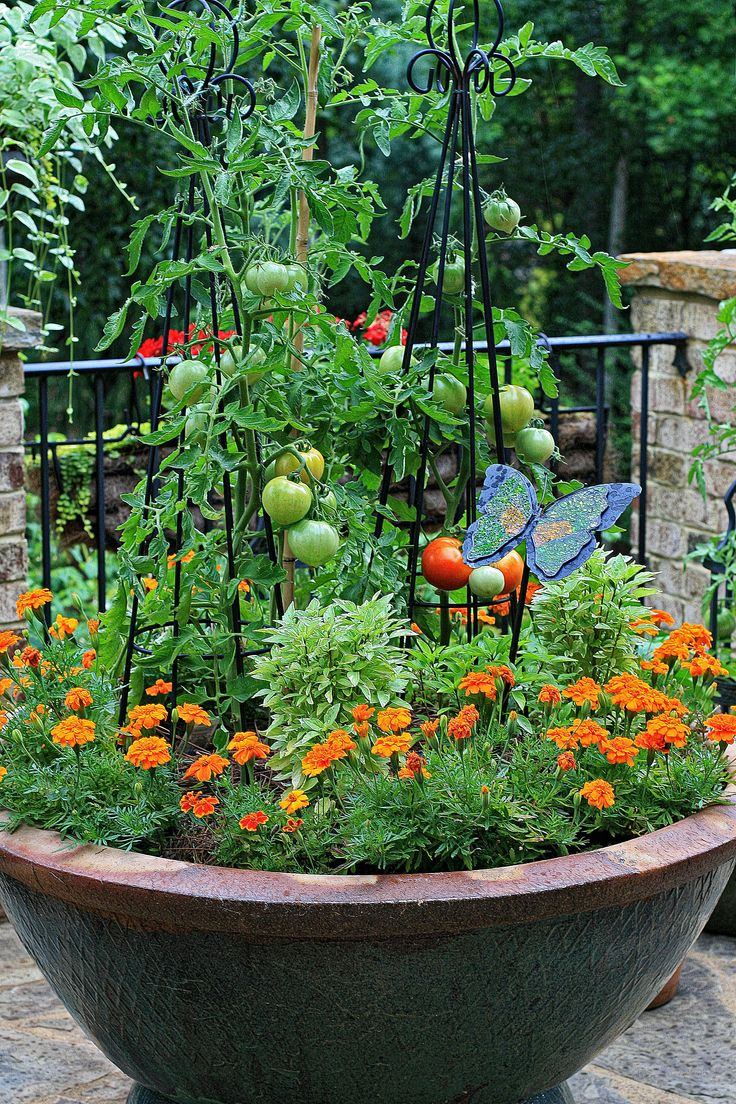 Large Container Planted With Tomatoes, Basil And Marigolds