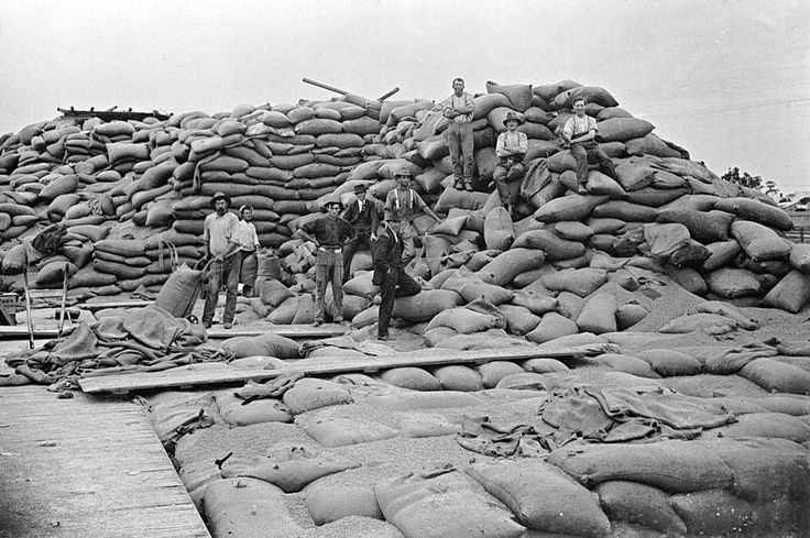 Men working on a wheat stack that had been damaged by a mouse plague in 1917. They are moving bags with trolleys. The stack was in the Warracknabeal rail yards.