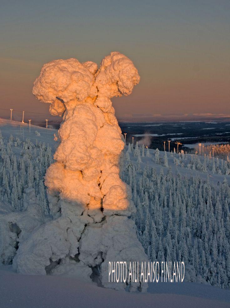 Heavy snow, tree as culpture by Aili Alaiso