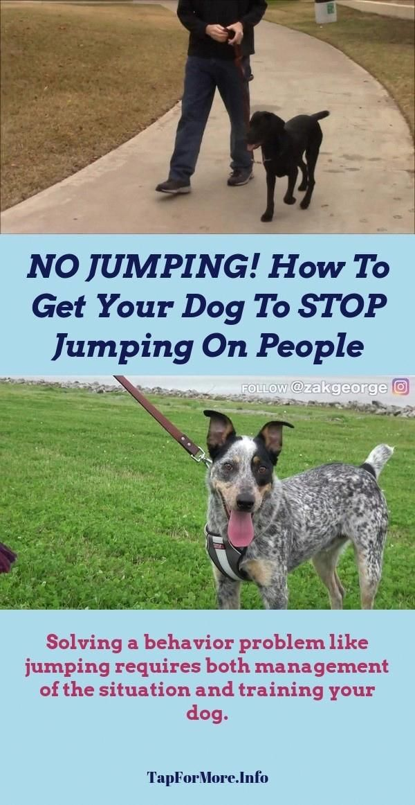 Stop Dog Jumping And How To Teach Your Dog To Lay Down Check The