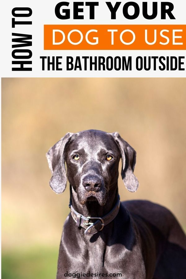 How To Get Your Dog To Use The Bathroom Outside In 2020 Dogs Dog Training Your Dog