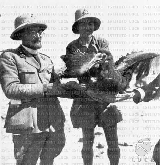 Cappellano della milizia e camicia nera alle prese con un uccello esotico  AO/AO043/AO00002890D.JPG