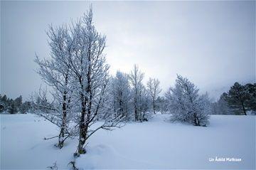 Fotoalbum Sjodalen - www.aasmathi.com