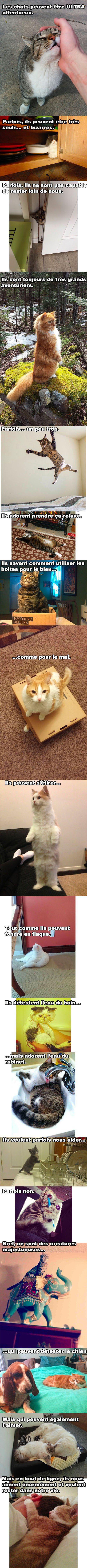 le B-A-BA des chats