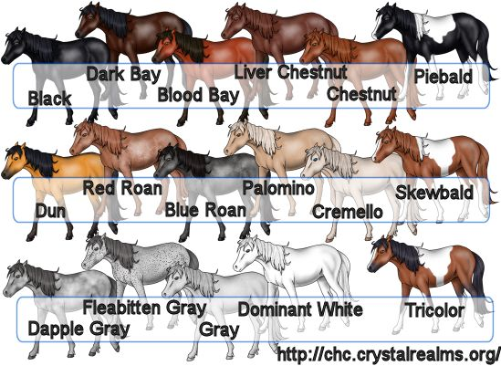Horse Color and Markings Chart | Any color is acceptable, as is any combination of white markings. The ...