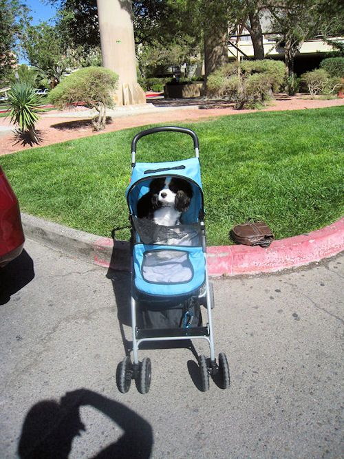 claude fonrose on Twitter Dog stroller, Mans best friend