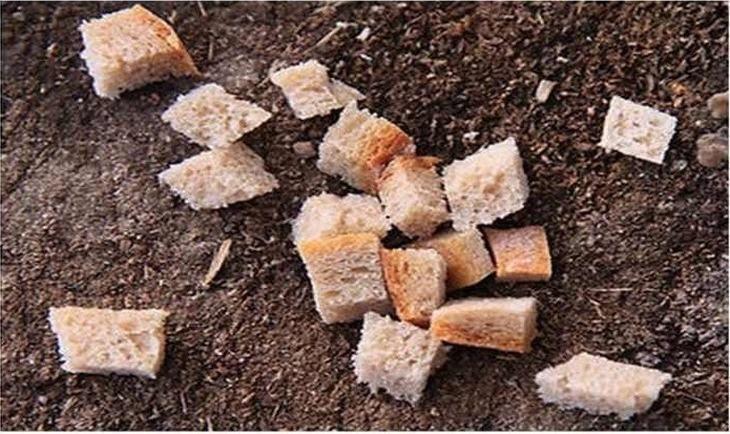 Boas Maneiras À Mesa Mundo Afora...                                                       Na Estônia, certifique-se de beijar o pedaço de pão que caiu no chão antes de colocá-lo no lixo.