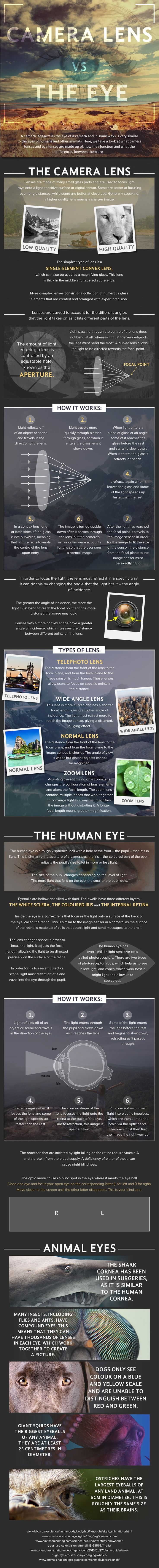 What are the differences between the human eye and the lens on your camera? This #photography cheat sheet makes an in-depth comparison...