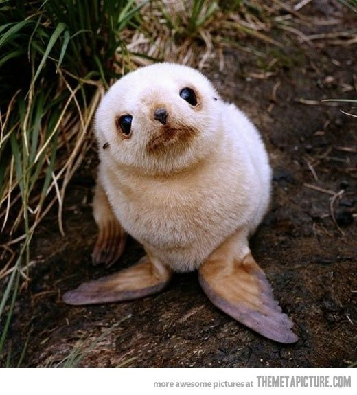 The Internet needs more baby sea lions…
