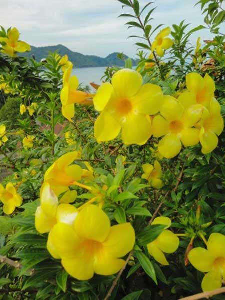 Nomes e Fotos de Flores Brasileiras: Populares e Raras do Brasil