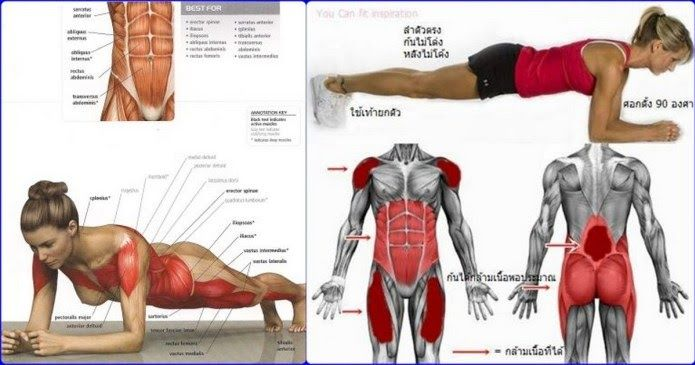 Plank Exercise Benefits For a Powerful Abs Workout http://www.all-bodybuilding.com/2017/03/plank-exercise-benefits-for-powerful.html