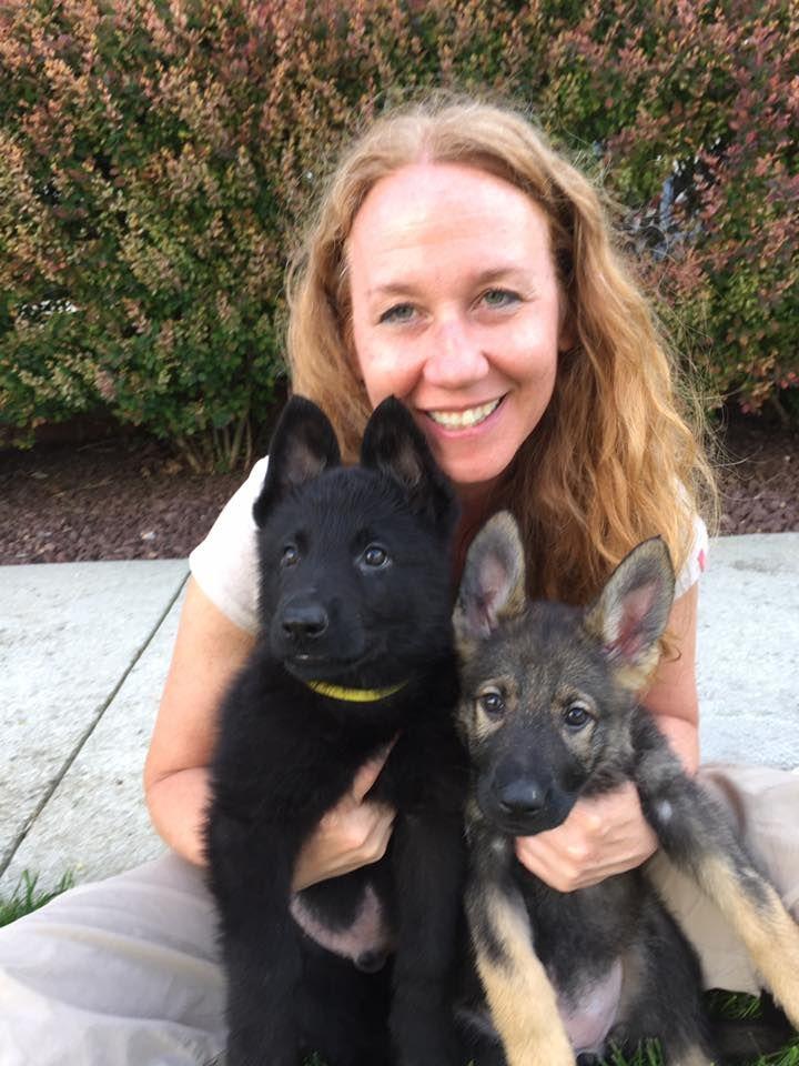 GSD Puppies-Lobo & Lexi