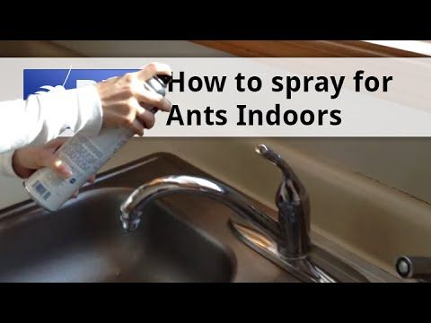 11 best images about fire ants on pinterest traditional home and ants. Black Bedroom Furniture Sets. Home Design Ideas