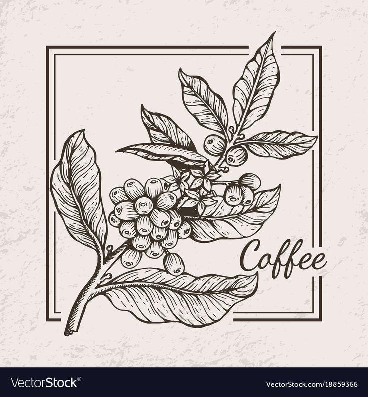 Pin by Vietnam Organic Coffee Bean Co,Ltd. on Sản Phẩm