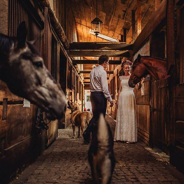 Getting married surrounded by animals seems like a good idea.    Image by @tomasztolloczko, edited with ELMT Spirit 02.    #triberedleaf #elmt #elmtspirit    #Regram via @redleafstudios