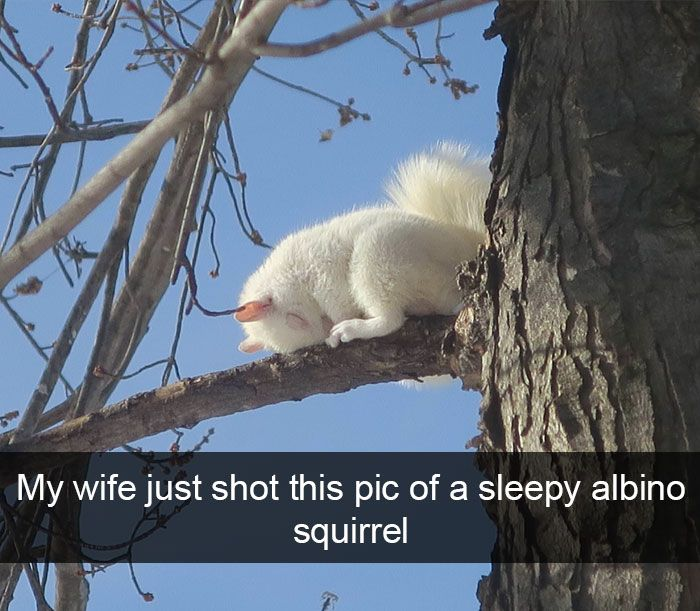 271 Funny Animal Snapchats That Will Leave You With The Biggest Smile – Frank Giroup