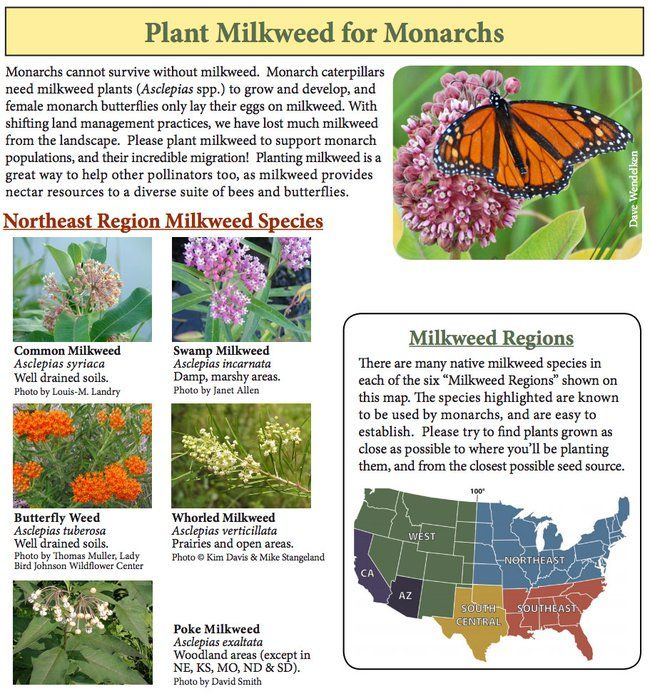 You can help stop the Monarch Butterfly Massacre by ... gardening (plant milkweed!) : TreeHugger
