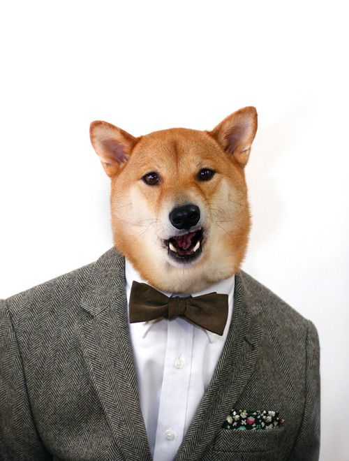 Menswear Dog x The Tie Bar