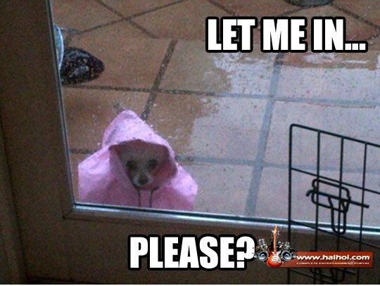 Funny Rainy Day | home Videos Galleries Pictures SMS Jokes ... Funny Rainy Weather Quotes