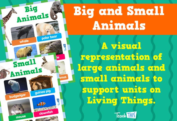 Big and Small Animals