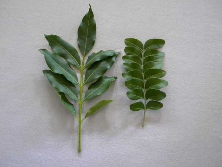 SNEEZEWOOD is on the right-always ends in a pair of leaves