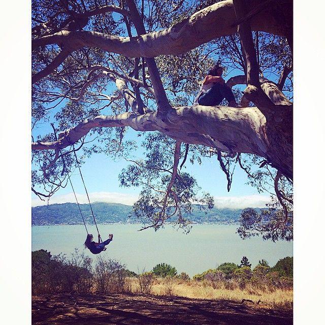 The Hippie Tree - Tiburon, CA