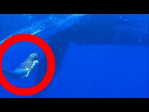 REAL MERMAID sightings footage caught on tape! (Swimming with whales, Southern Ocean.) - YouTube