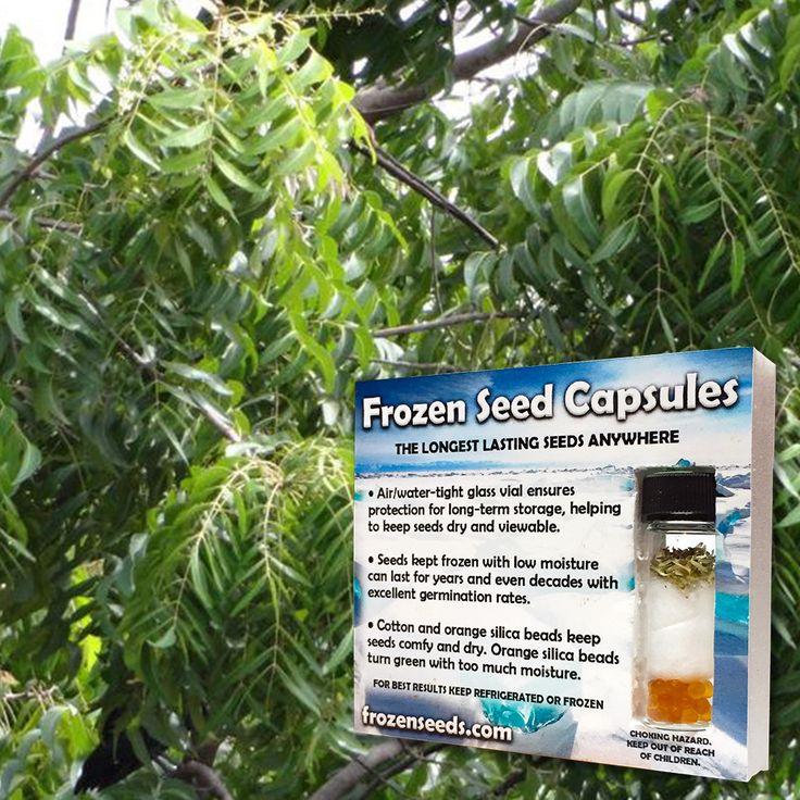 Neem Tree Seeds (Azadirachta indica) + FREE Bonus 6 Variety Seed Pack - a $35 Value!