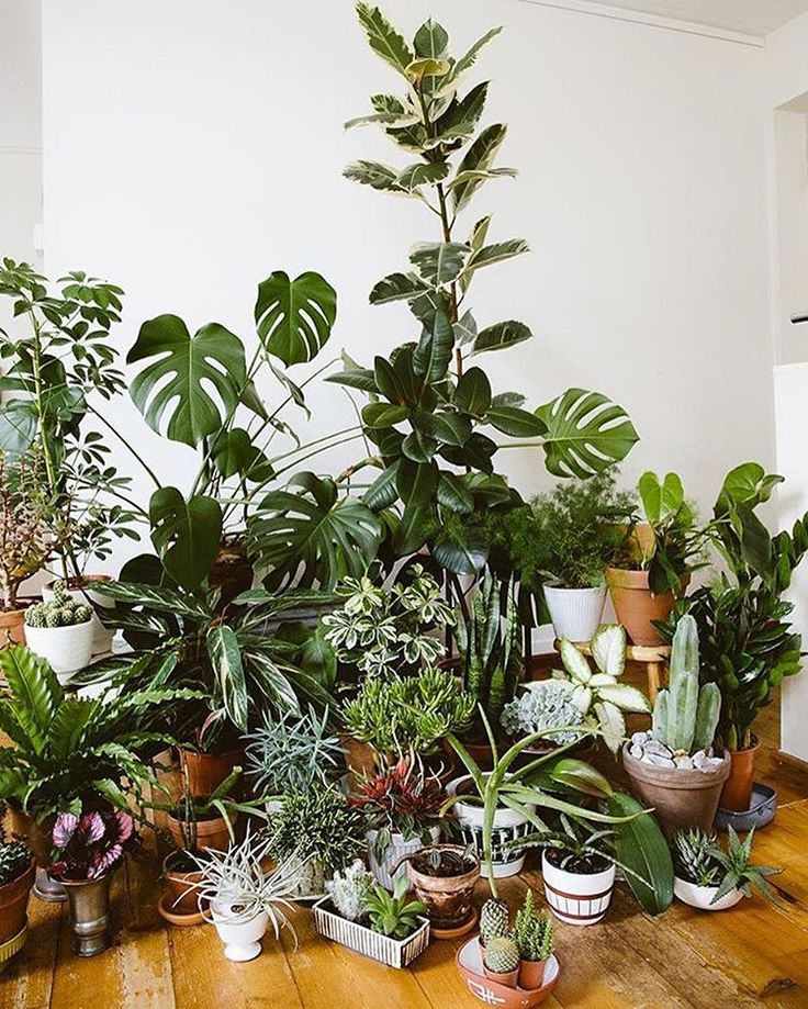 It might be impossible to come up with a caption that conveys the joy that bursts out of this photo from the #InteriorRewilding feed! @still_______, you amaze us! We post a new photo of your indoor jungles each week. Tag yours #InteriorRewilding for a chance to be featured!