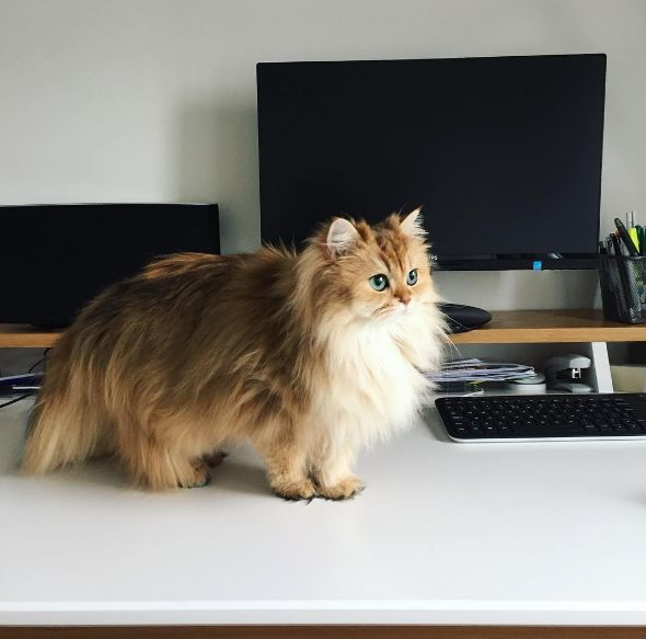 Smoothie the Cat is a Majestic Beauty