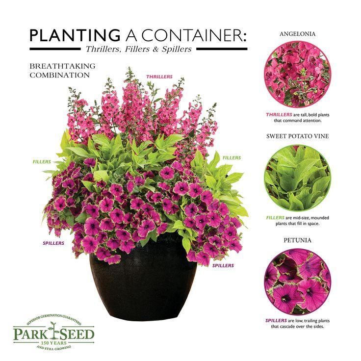 Design beautiful flowerpots and windowboxes using the Thriller/Filler/Spiller formula!