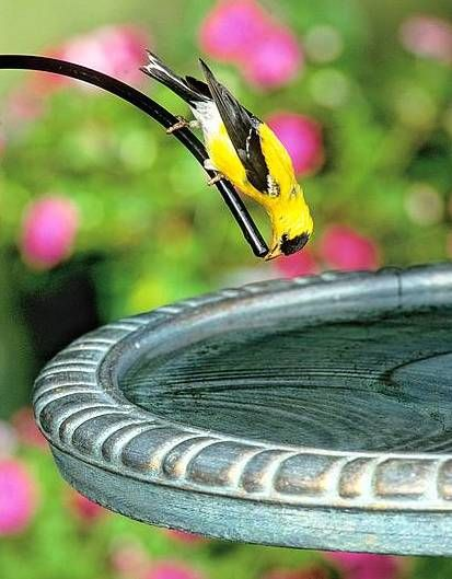 Birds love birdbath drippers!  Water stays fresher and mosquitoes can't lay eggs. See more activity at your bird bath with moving water!