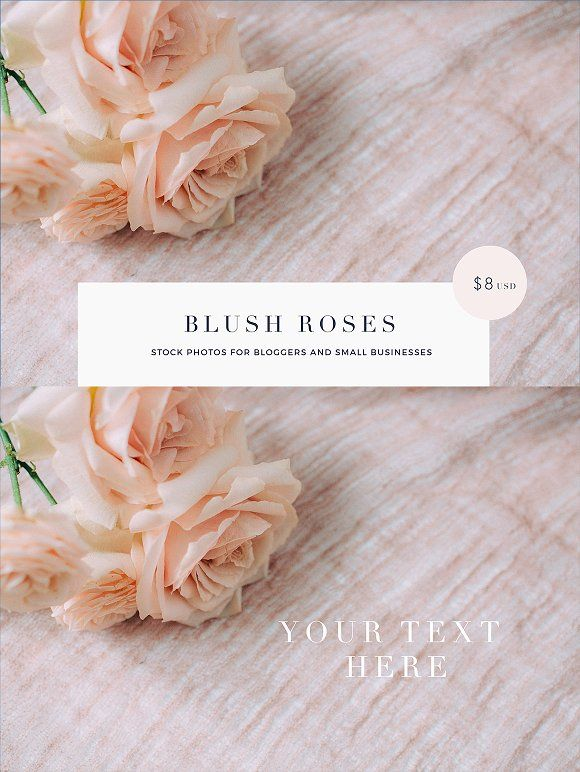 Blush roses stock photos - bloggers