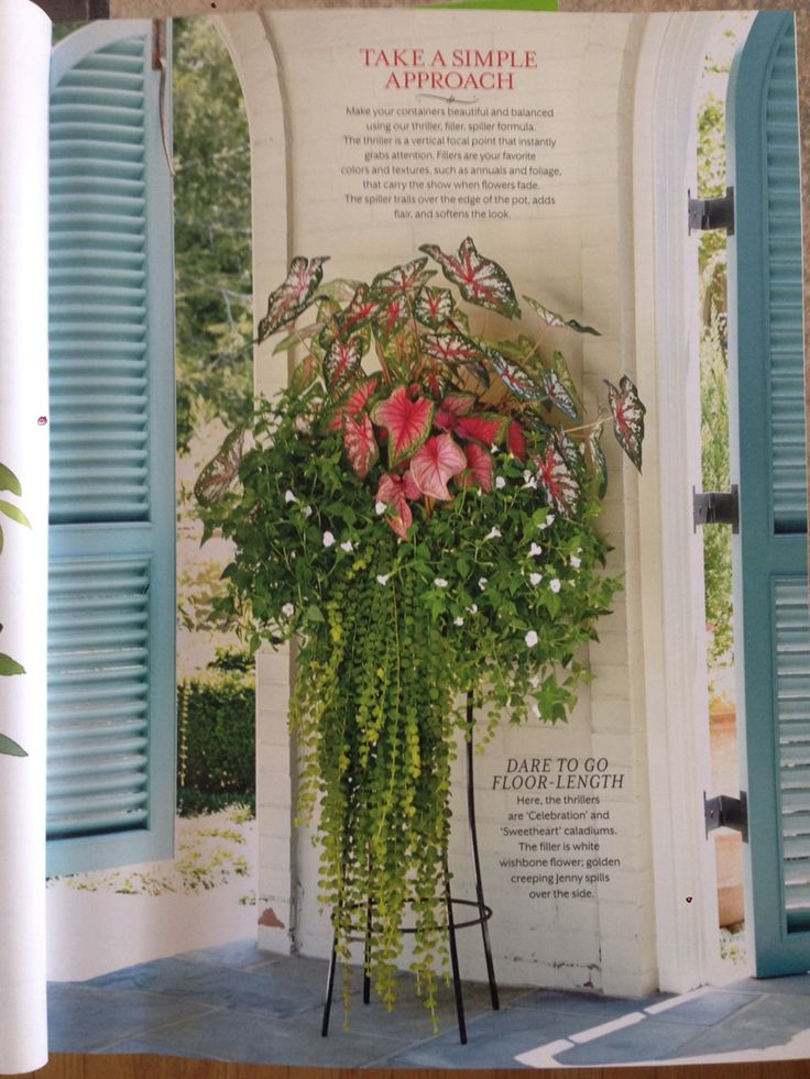 From Southern Living Container Gardening Magazine. I Wanna Plant This!