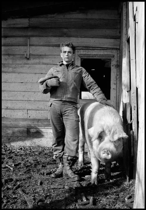 James Dean on his uncle Marcus Winslow's farm. Fairmount, 1955.  (Dennis Stock)James Of Arci, Photos, Pigs, The Farms, Dean O'Gorman, Dennis Stockings, James Dean, People, Jamesdean