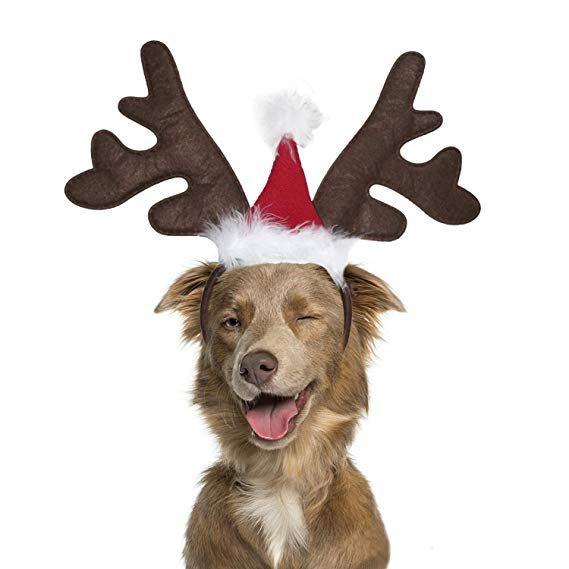 Amazon Com Bwogue Dog Elk Reindeer Antler Headband With Santa Hat Pet Pet Christmas Costume Head Reindeer Antlers Headband Christmas Animals Reindeer Antlers