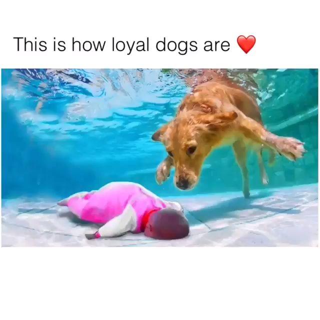 Compilation Of Loyal Dog ❤️♥️