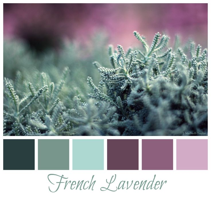 french colorspalette | For the home... / French lavender color palette