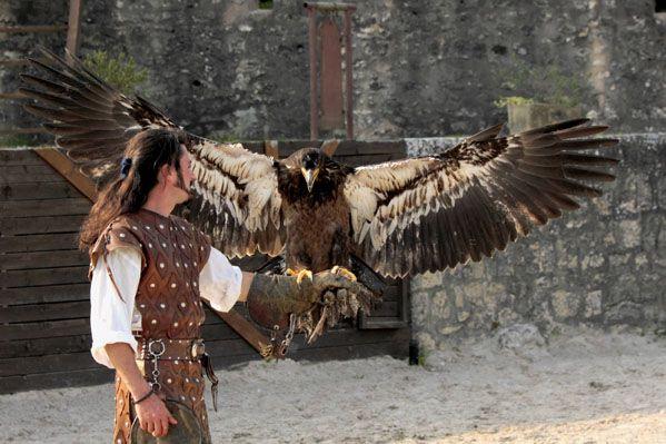 Les aigles des remparts - Provins - Seine et Marne - Spectacle