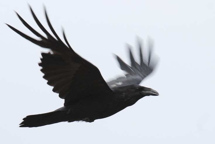 Three Raven Stories – Writing on politics, feminism and ...
