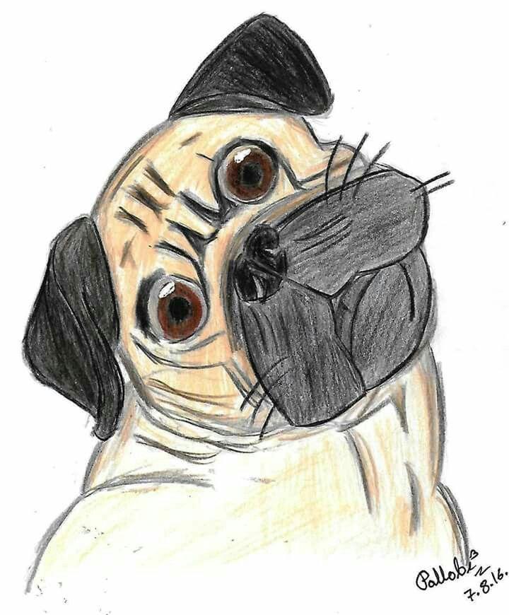 Week 31 : Realism -pug