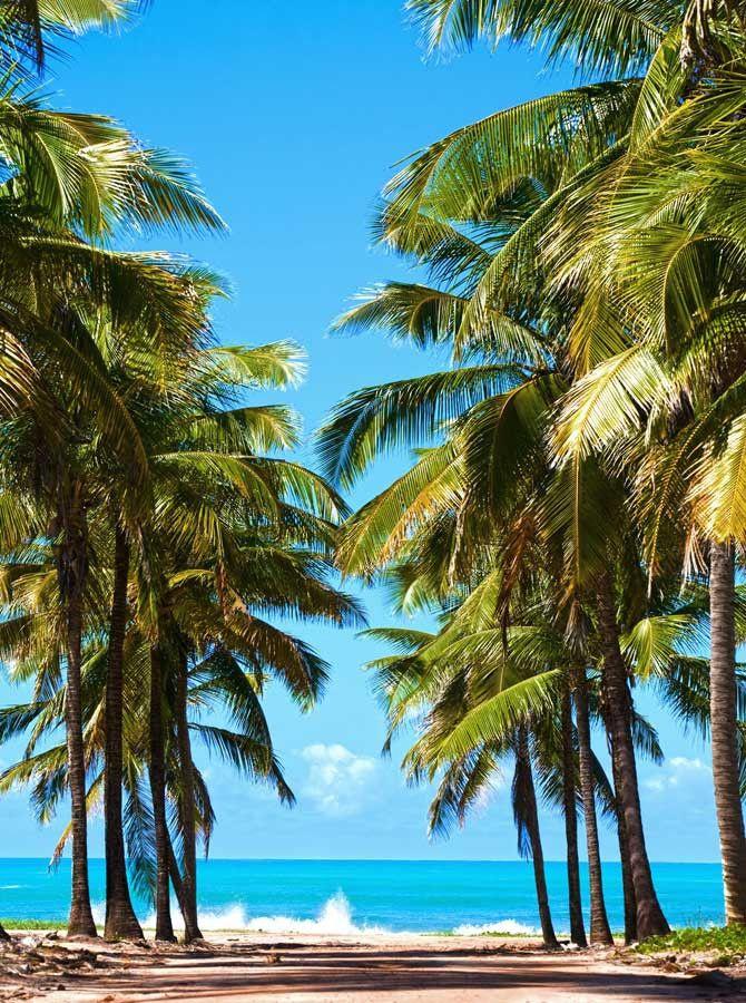 x093 Beach Palm Lane Backdrop