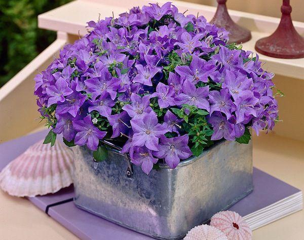 E' possibile arredare casa con splendide piante da appartamento. Le piante da appartamento ossigenano l'ambiente, purificano l'aria, contrastano l'umidità, eliminano i cattivi odori e ...