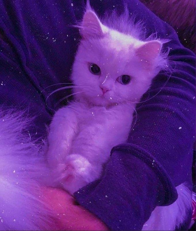 Pin By Rahma On Photo Profil In 2020 Cat Aesthetic Cute Cat Wallpaper Cute Little Animals