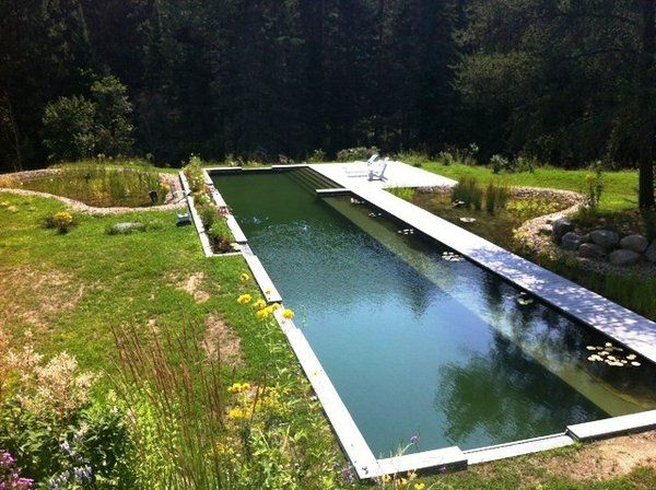 17 best images about natural ponds on pinterest gardens for Pond swimming pool