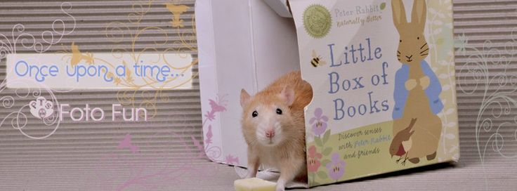 Little mouse coming out of Petter Rabbit books, once upon a time