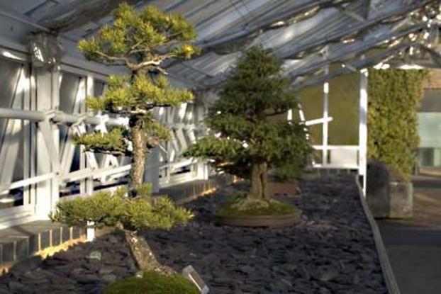 Bonsai trees inside the Bonsai House