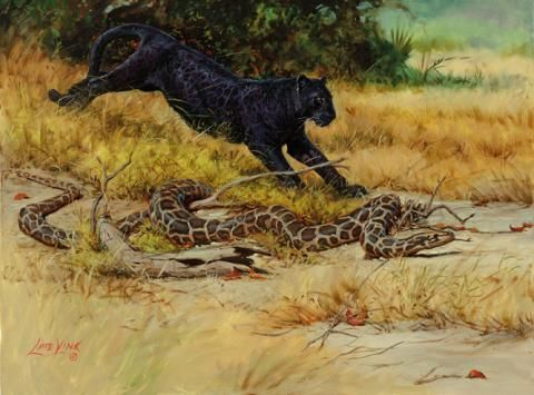 The Quick Panther-Canter Original illustration for 'The Jungle Book' Artist: Lute Vink Medium: Oils on linen. Signed This pictures tells the story of Bagheera - the black Panther, and Kaa - the snake, as they rush to rescue Mowgli from the Bandhar-log - the troop of monkeys, that has stolen the young human so that they can learn from him.