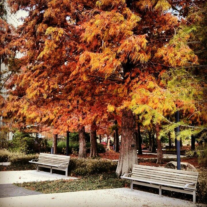 Myriad Gardens, OKC, OK in autumn